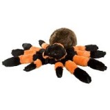 "CK CUDDLEKINS 12"" Tarantula Stuffed Animal, Each"