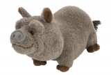 "CK MINI CUDDLEKINS 8"" Pot Bellied Pig Stuffed Animal, Each"